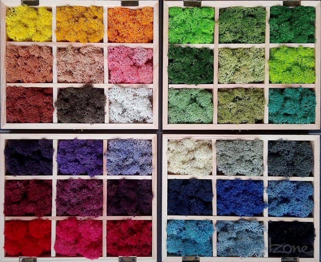 Скандинавски мъх - цветове